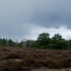 Donkere wolken boven het bos
