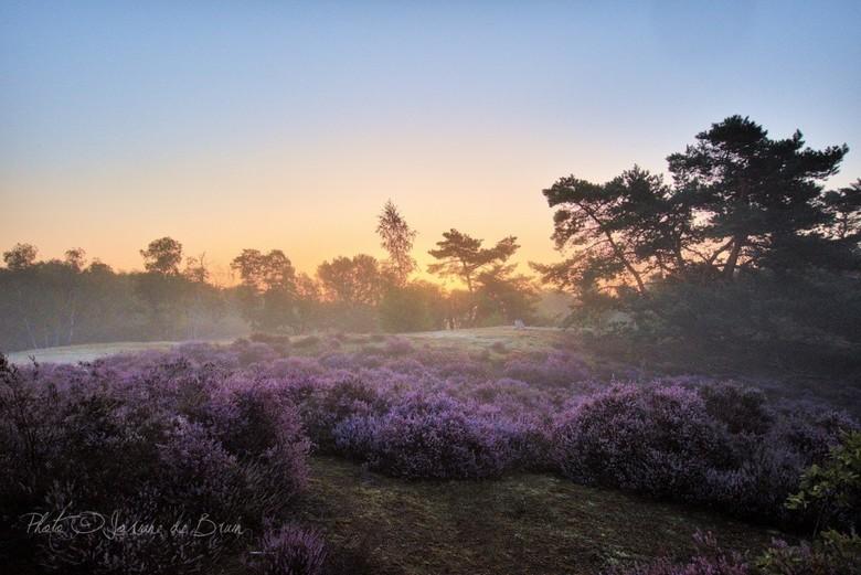 Heide in de vroege ochtendzon  - Ja ik ben misschien een beetje 'laat' met foto's van de heide, maar bij ons was het altijd erg warm in