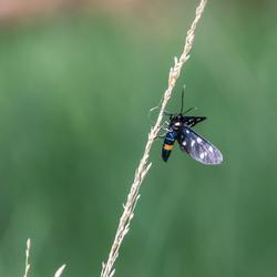 Pheageavlinder