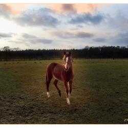 'my little pony'