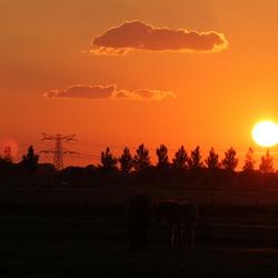 paarden bij ondergaande zon