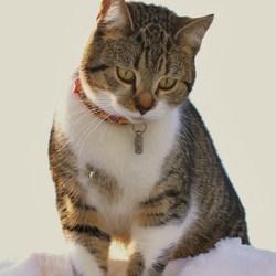 kat in de sneeuw
