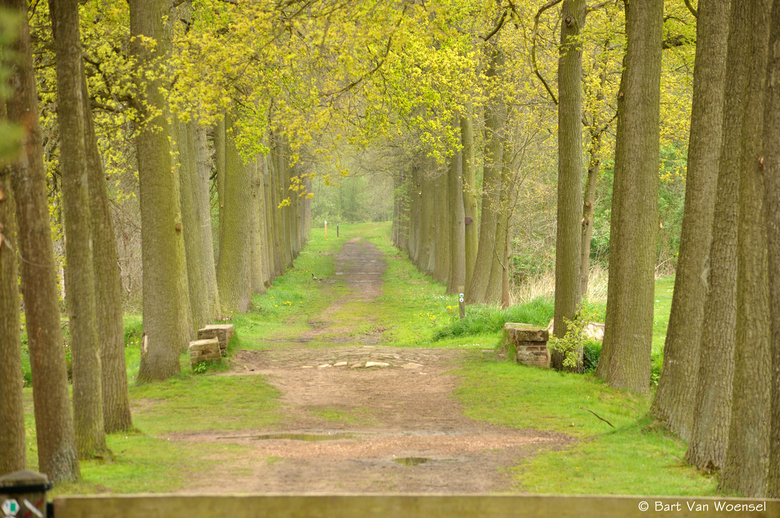 A walk in the park - landschap natuur bomen planten