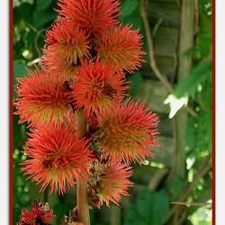 een prachtige, gevaarlijke plant..
