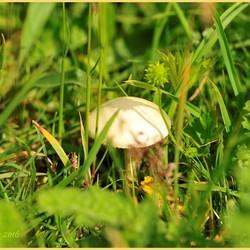 Geen paddenstoelentijd