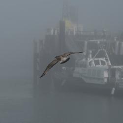 Mist in de haven