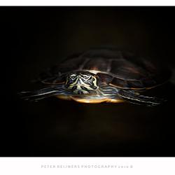Waterschildpadje
