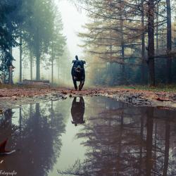 Lopen in het mistige bos