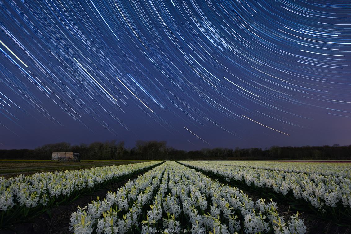 Flower field under a sky full of stars