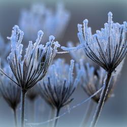 frozen decay