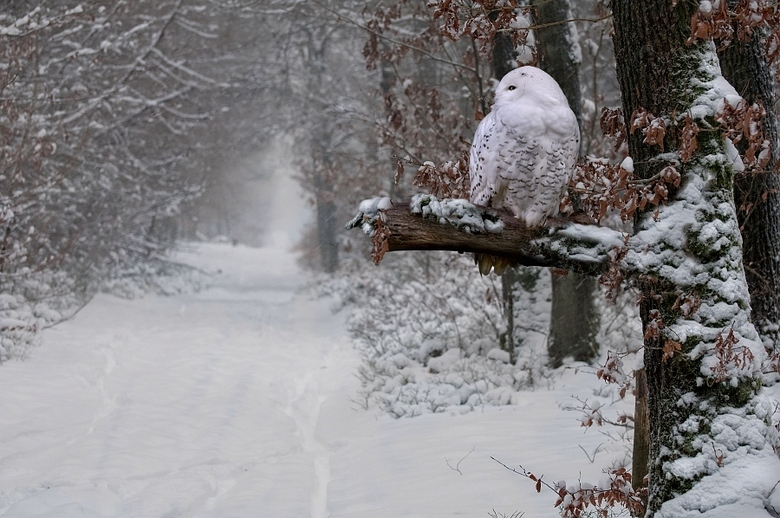 The White Wisdom - Een bewerking van twee foto's.