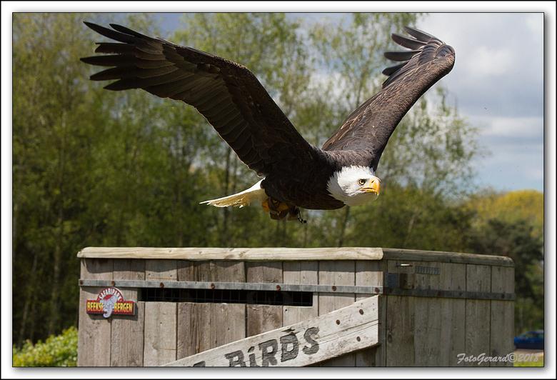 Birds - Nogmaals een bird uit Beekse Bergen.<br /> Gr. Gerard