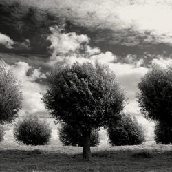 In de polder.jpg