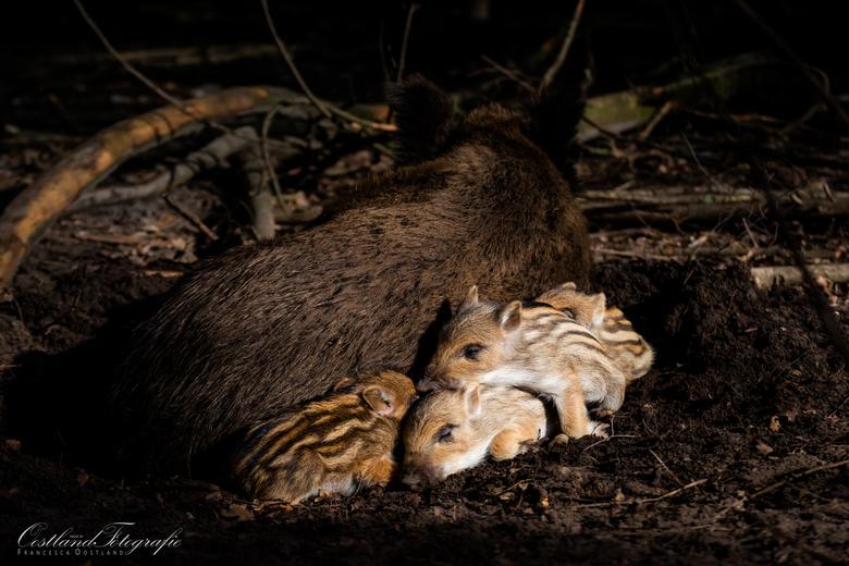 Slaaptijd - Het licht scheen door de bomen heen en precies de kleintjes werden belicht.