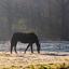 LvdAa - Paard - 3909 W46 2019 Oirschot 's Heerenvijvers