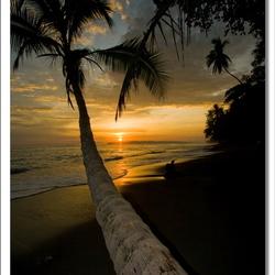 Zonsondergang tussen de palmen