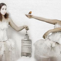 little bird.......
