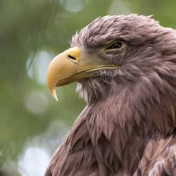 2013 ouwehands dierenpark