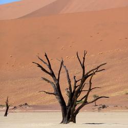 Deadvlei Namibië
