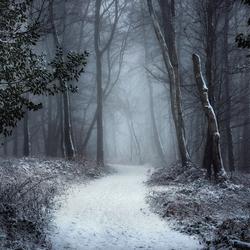 The White Path.