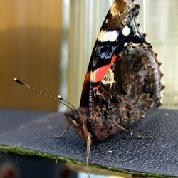 Vlinder op warme plek