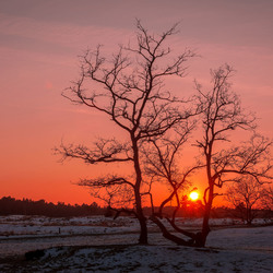Winter in Holland,...Sunset.
