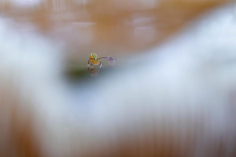 Springstaartenstress! - De springstaartjes, moest er natuurlijk weer naar op zoek tijdens de 'paddenstoelenzoomdag' georganiseerd door Daan