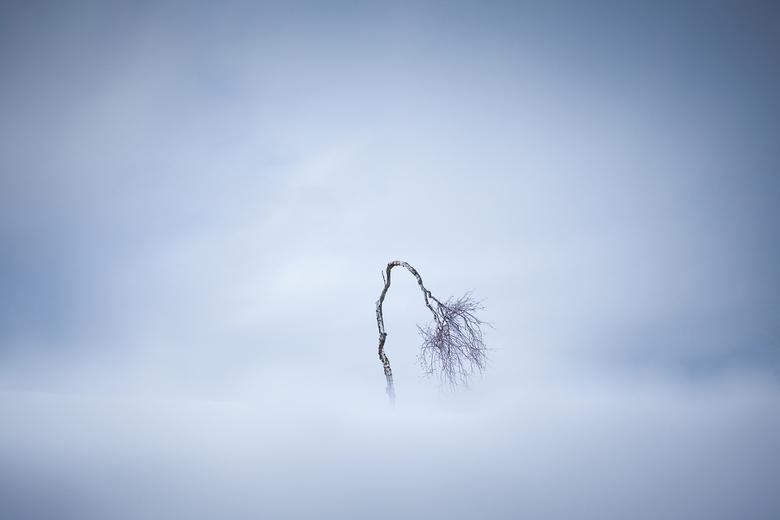 De eenzame boom - Een eenzaam boompje in de sneeuw gefotografeerd in de Hoge Venen. Sereen...<br /> <br /> www.svenbroeckx.com