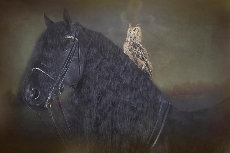 Grand prix kampioen 2016 Wilke C van de Wijdewormer - Deze foto is heel speciaal voor mij omdat dit het paard van mijn dochter is en de Uil van een go