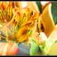 lens flare flowers