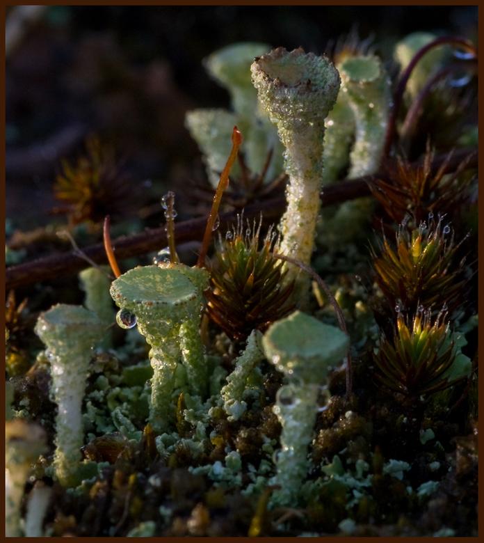 bekermos - Ook dit vond ik op de Loonse en Drunense duinen, weliswaar deze keer geen beestjes maar ik vond het toch mooi genoeg voor een macro. Doorda