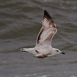 Natuur in de Eemshaven