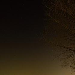 Winter tree,night sky