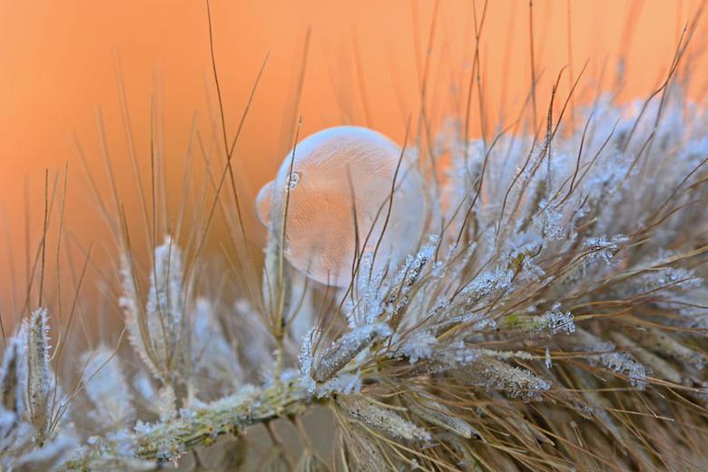 Koning winter! - Een hele kleine bevroren zeepbel op een plant.