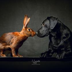 Haas en de hond