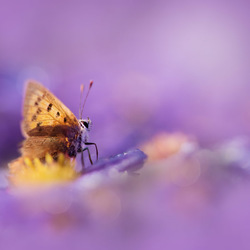 Purple dreamworld