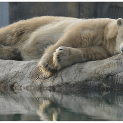 Let sleeping bears sleep..