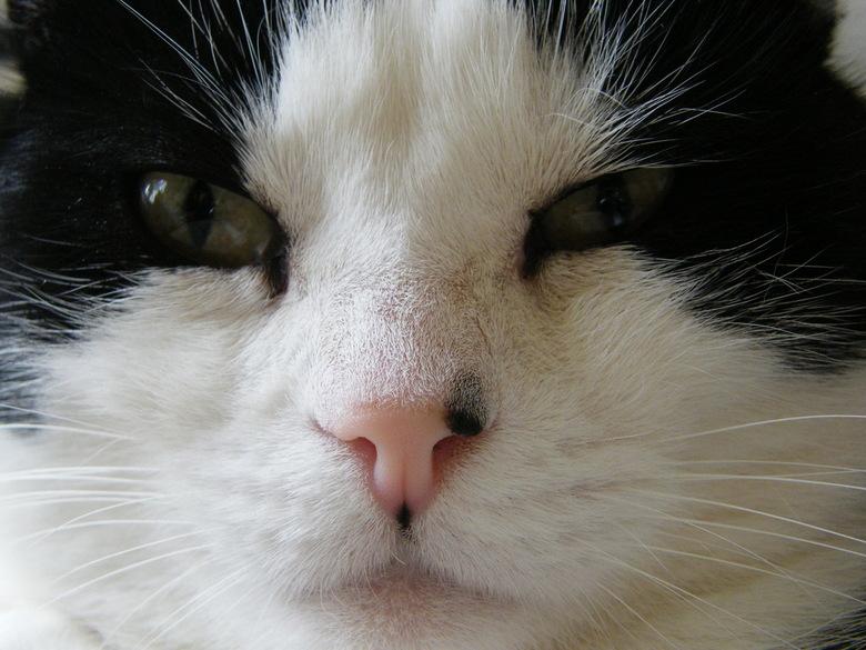 Breezer in close-up -