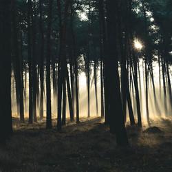 Mooie wandeling door dit magisch bos