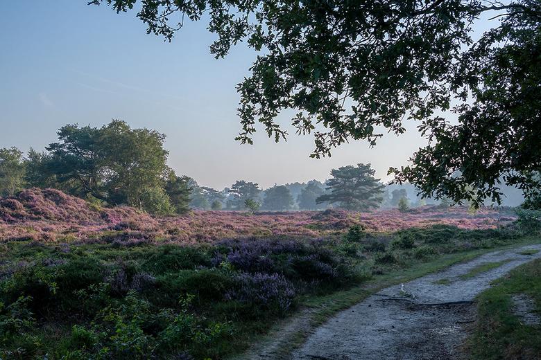 Bakkeveen 's morgens vroeg - Vanochtend hebben we een wandeling gemaakt op het Mandefjild op de heide bij Bakkeveen. Prachtig mooi.<br /> <br /> Gro