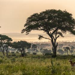 Ochtendgloren in Uganda