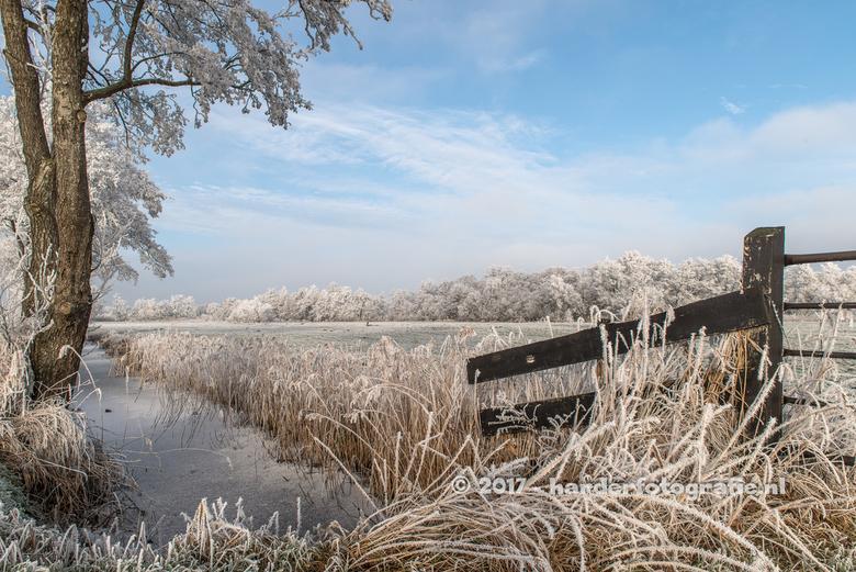 winterlandschap nabij Meppel - Een foto uit 2017, toen de rijp aan de bomen en meer sneeuw op de grond lag.