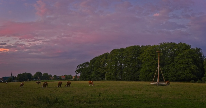 Cows Pano - Some cows in Elswout