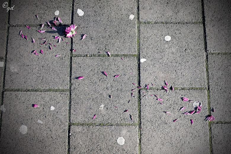 Straat bloem - Is dit nu echte straatfotografie??