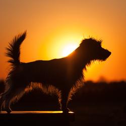 Lesley bij zonsondergang