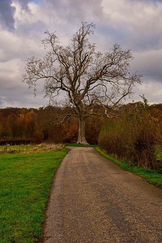 boompje (1 van 1) - In de buurt van Terworm (Heerlen)