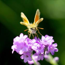 Vlinderzoektocht