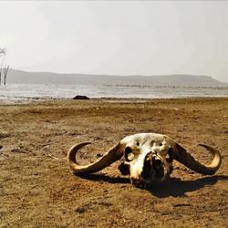 Skull at Lake Nakuru
