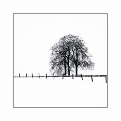 Winterboom 2010