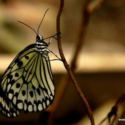 Butterfly-3-